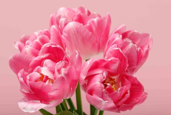 Blumenerwachen und das jeden Tag