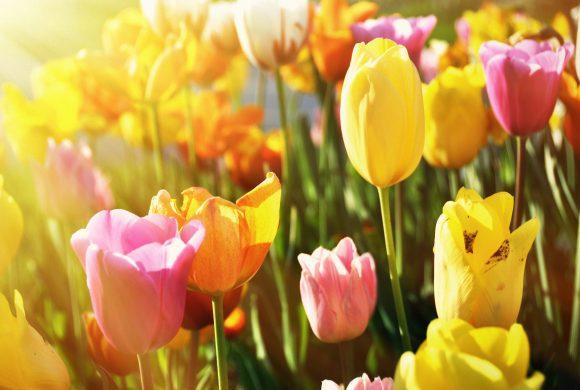Blütenreigen im Frühlingsrausch